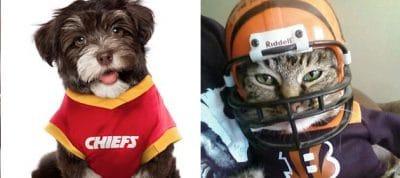 Week-4-NFL-Picks-Crazy-Pet-Costumes