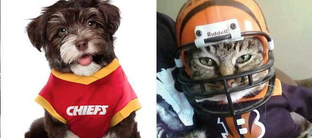 Week-4-NFL-Picks-Crazy-Pet-Costumes